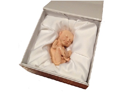 3d foetus
