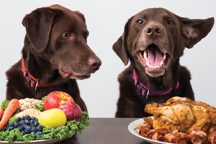 9 Tips To Follow If You Wish To Improve Your Dog's Diet