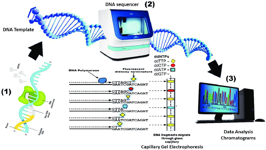 DNA Sequencing, History and Application